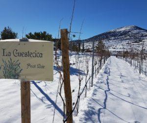 ¿Cómo influye la calidad de la uva de un vino de altura?